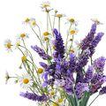 Lavender Chamomile Huggies Type Sample size