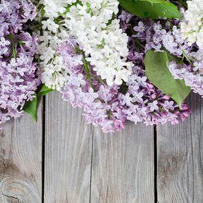 Lilac Fragrance Oil - 1.75 oz