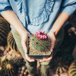 Cactus Flower Fragrance Oil - 2 oz