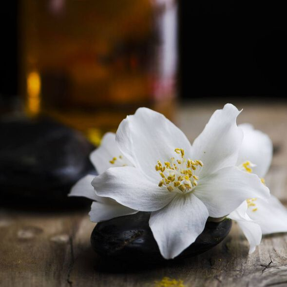 Sultry Black Jasmine Fragrance Oil