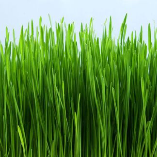 Grass Stain Fragrance Oil - Trial Size