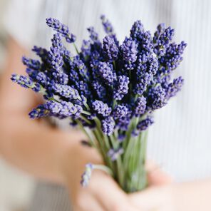 Lavender Fine Essential Oil - 0.4 oz