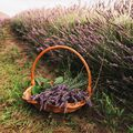 Peaceful Lavender Fragrance Oil - 4 oz