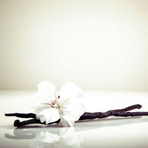 Vanilla, Non-Discoloring Fragrance Oil