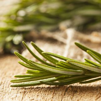 Rosemary Essential Oil - Trial Size