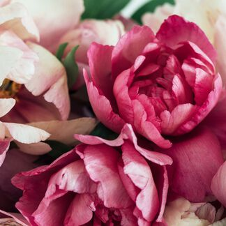 Peony and Amberwood Fragrance Oil - Trial Size