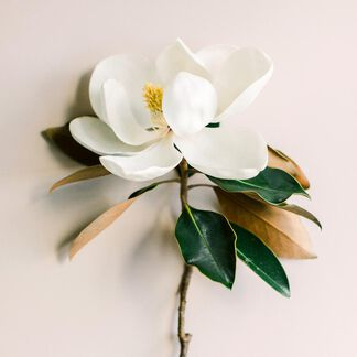 Magnolia Leaf and Tonka Fragrance Oil - Trial Size