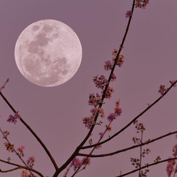 Violet Moondance Fragrance Oil