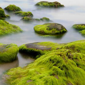 Sea Moss Fragrance Oil - 2 oz