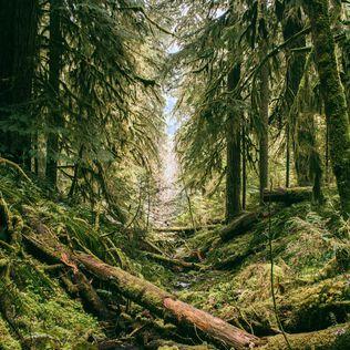 Verdant Woods Fragrance Oil - Trial Size