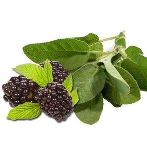 Blackberry Sage Fragrance Oil - Trial Size