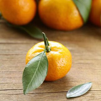 Red Brazilian Mandarin Essential Oil - 1.5 oz