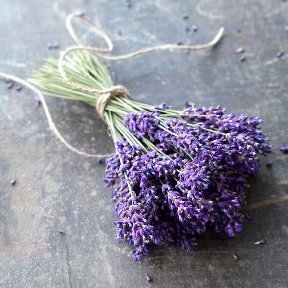 Lavender Absolute 50%