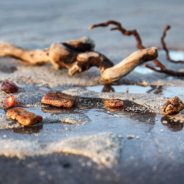 Driftwood and Amber Fragrance Oil