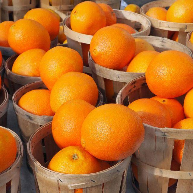 Orange 10X Essential Oil Sample Size