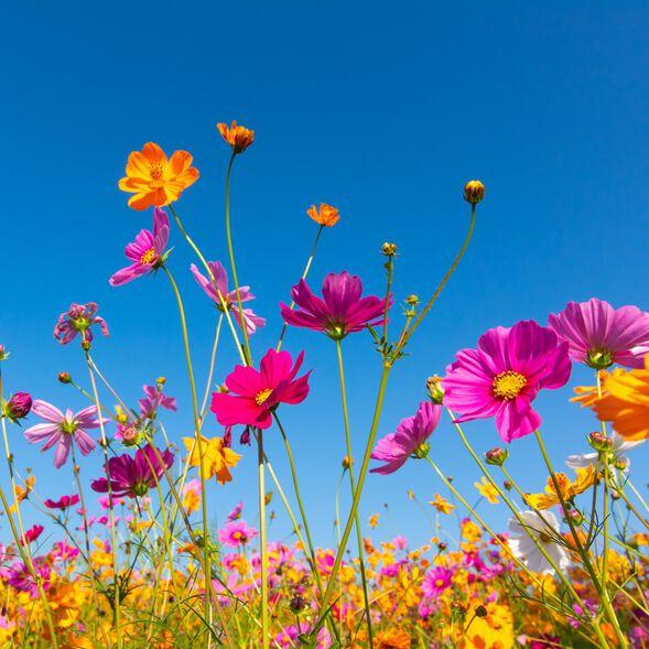 Wildflower Breeze Fragrance Oil