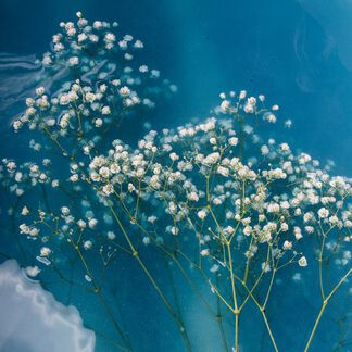 Baby's Breath Fragrance Oil - Trial Size