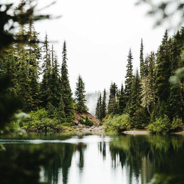 Evergreen Forest Fragrance Oil