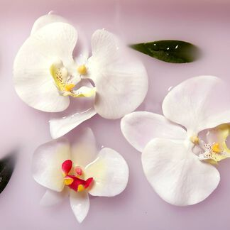 Blushing Orchid Fragrance Oil - Trial Size