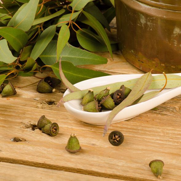 Rejuvenating Eucalyptus Fragrance Oil