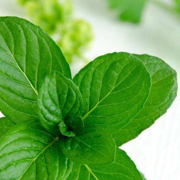 Spearmint Eucalyptus Fragrance Oil