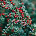 Lingonberry Spice Fragrance Oil - 1.75 oz