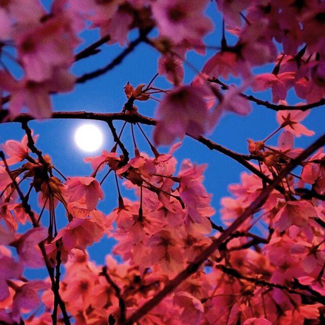 Moonlight Pomegranate Fragrance Oil