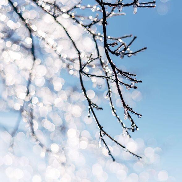 Alpine Frost Fragrance Oil