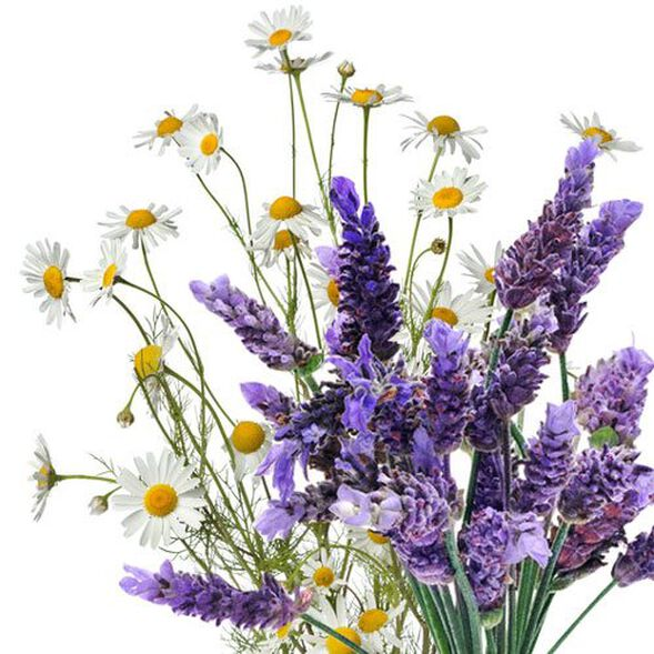 Lavender Chamomile Huggies Type Fragrance Oil