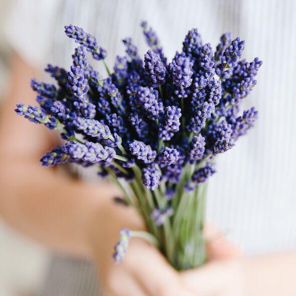 Lavender Fine Essential Oil