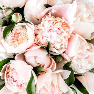 Pink Peony Fragrance Oil - Trial Size