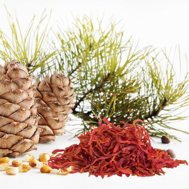 Cedar And Saffron Fragrance Oil