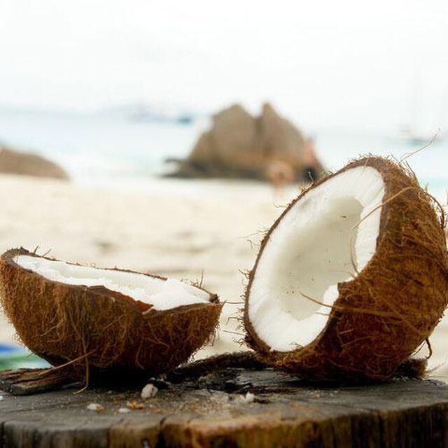 Island Coconut Fragrance Oil
