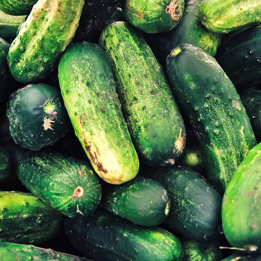Cucumber Garden Fragrance Oil | Bramble Berry