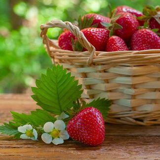 Strawberry Fragrance Oil - Trial Size
