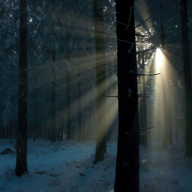 Spellbound Woods Fragrance Oil