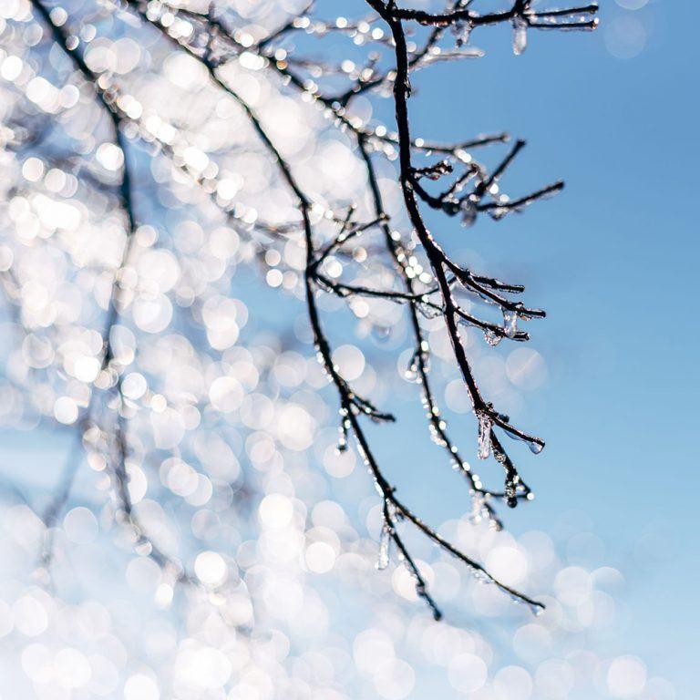 alpine frost fragrance oil | bramble berry