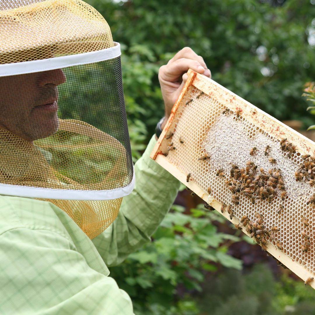 beekeeping for big dipper wax works